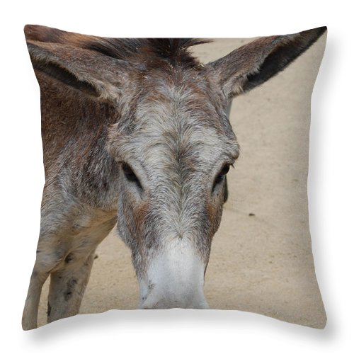 Donkey Throw Pillow featuring the photograph Cute Donkey by DejaVu Designs