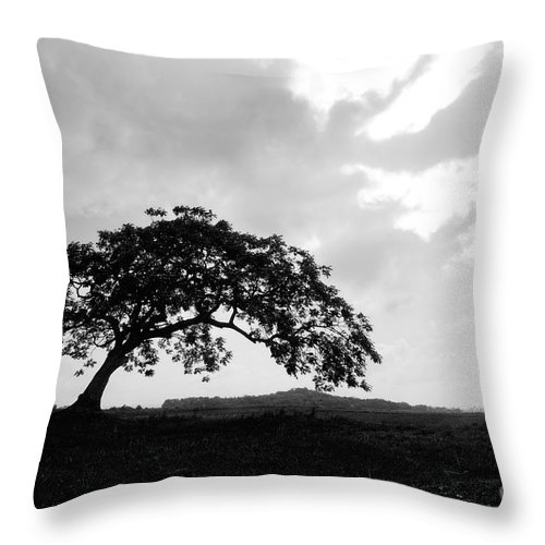 Art Throw Pillow featuring the photograph Dance by Dattaram Gawade