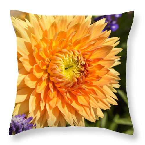 Flowers Throw Pillow featuring the photograph Dazzling Dahlia by Beverly Tabet