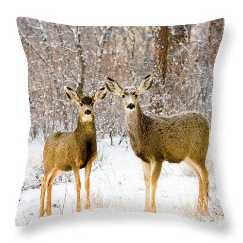 Mule Deer Throw Pillow featuring the photograph Deer In The Snowy Woods by Steve Krull