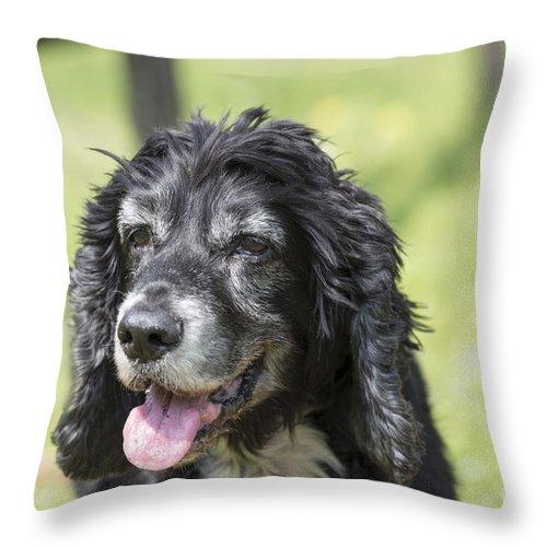 Dog Throw Pillow featuring the photograph Dog by Mats Silvan
