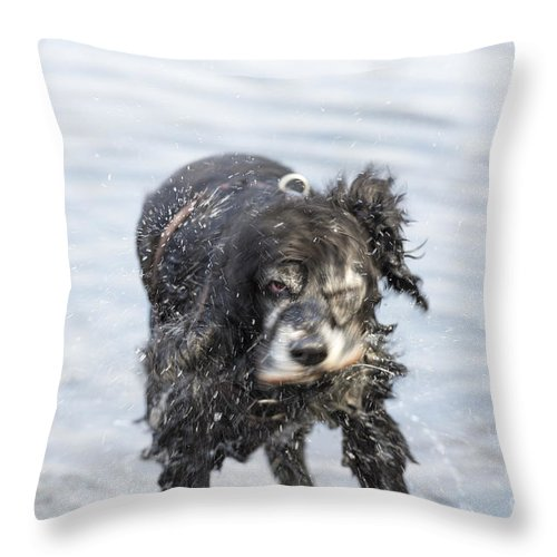 Dog Throw Pillow featuring the photograph Dog Shake by Mats Silvan