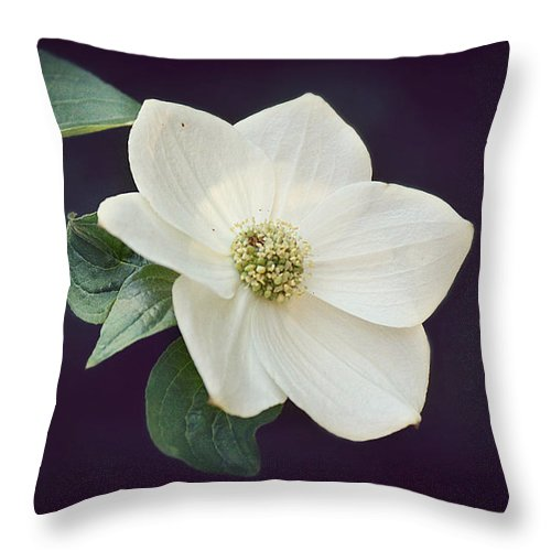 Dogwoods Throw Pillow featuring the photograph Dogwood Blossom by Melanie Lankford Photography