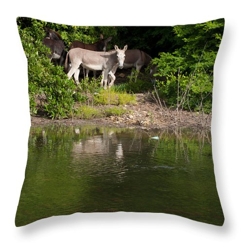 Donkey Throw Pillow featuring the photograph Donkeys by Luis Alvarenga