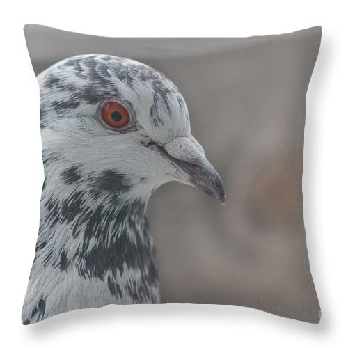Birds Throw Pillow featuring the photograph Dove Pigeon by Jivko Nakev