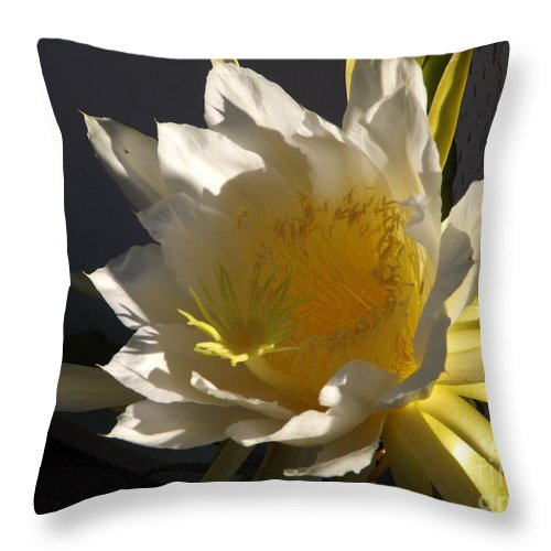 Dragon Fruit Throw Pillow featuring the photograph Dragon Fruit Blossom In Profile by Jussta Jussta