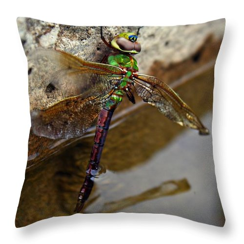 Dragonfly Throw Pillow featuring the photograph Dragonfly Dreams by Elizabeth Cernik