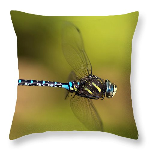 Dragonfly Throw Pillow featuring the photograph Dragonfly by Sharon Talson