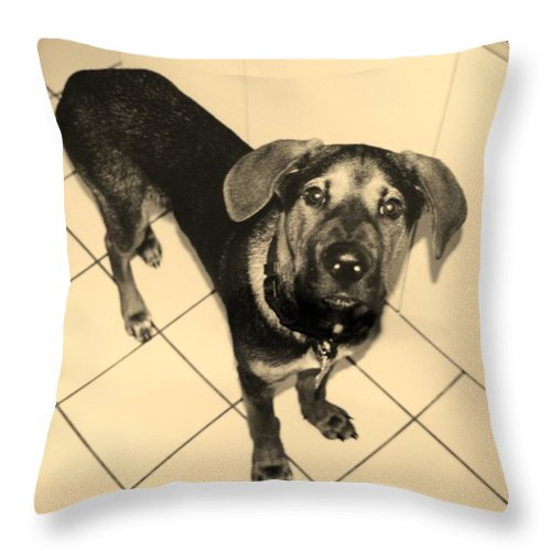 Dog Throw Pillow featuring the photograph Dukie by Rob Hans