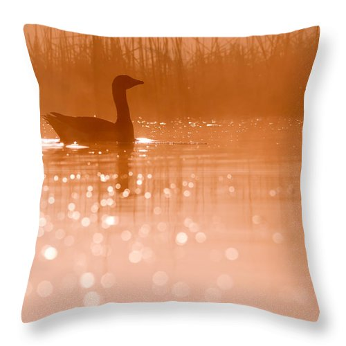 Greylag Goose (anser Anser) At A Very Early Throw Pillow featuring the photograph Early Morning Magic by Roeselien Raimond