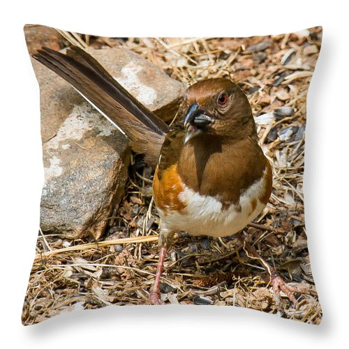 Eastern Towhee Throw Pillow featuring the photograph Eastern Towhee - Female by Robert L Jackson