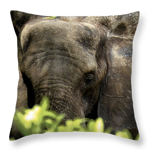 Elephant Throw Pillow featuring the photograph Elephant				 by Zina Stromberg