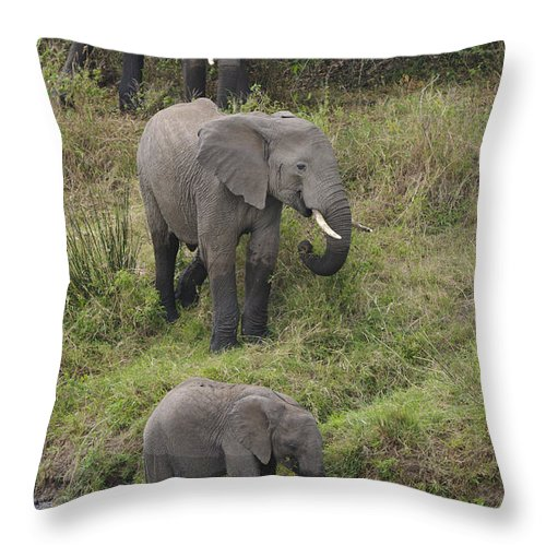Africa Throw Pillow featuring the photograph Elephants by John Shaw