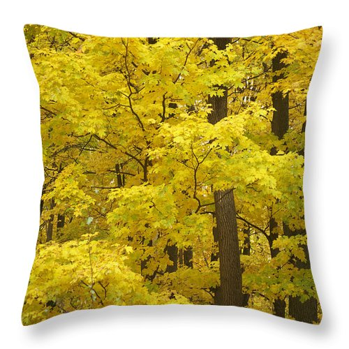 Fall Throw Pillow featuring the photograph Fall Glory by Elaine Mikkelstrup