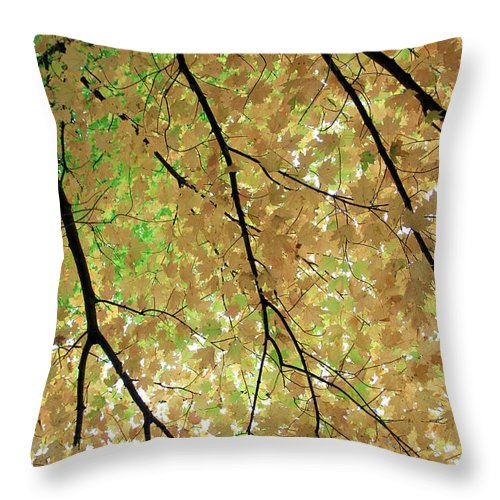 Fall Throw Pillow featuring the photograph Fall Tree by Valentino Visentini