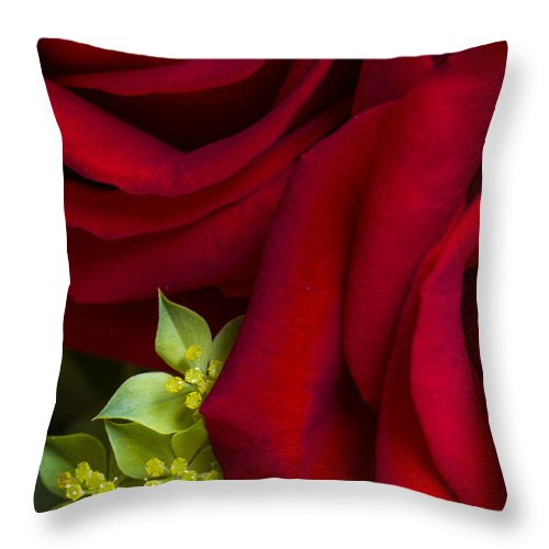 Red Throw Pillow featuring the photograph Family by Margie Hurwich
