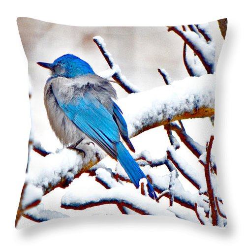 Mountain Bluebird Throw Pillow featuring the photograph First December Snow by Susanne Still