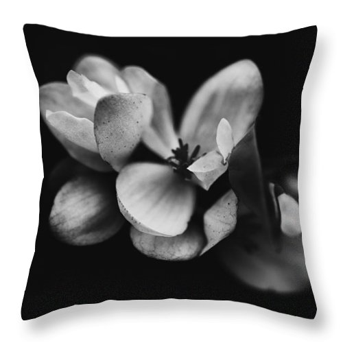 Background In Black Throw Pillow featuring the photograph Flower Fine Art by Joel Bourgoin