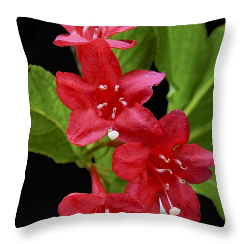 Plant Throw Pillow featuring the photograph Flowers Isolated On Black Background by Donald Erickson