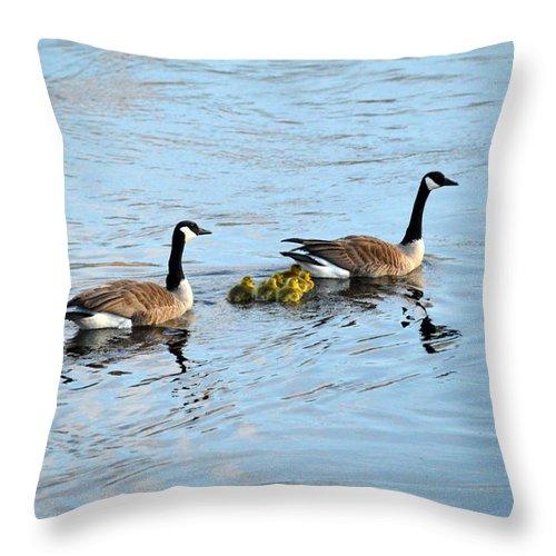 Ludington Throw Pillow featuring the photograph Follow Me by Linda Kerkau
