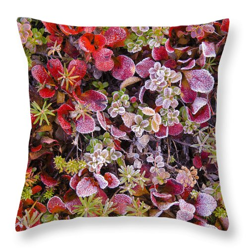 Denali National Park Throw Pillow featuring the photograph Frost On Autumn Tundra by John Shaw