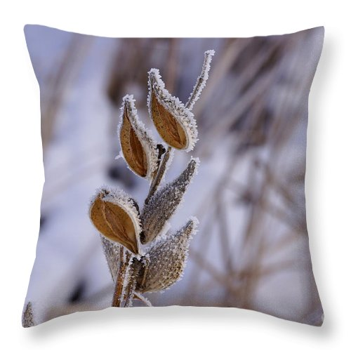 Milkweed Throw Pillow featuring the photograph Frosty by Lori Tordsen