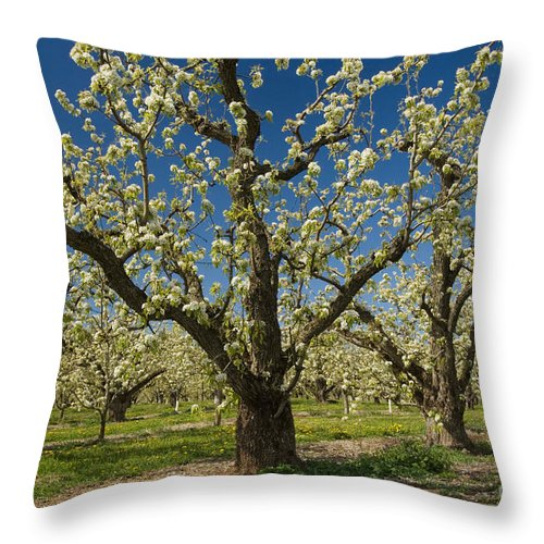 Orchard Throw Pillow featuring the photograph Fruit Orchard by John Shaw