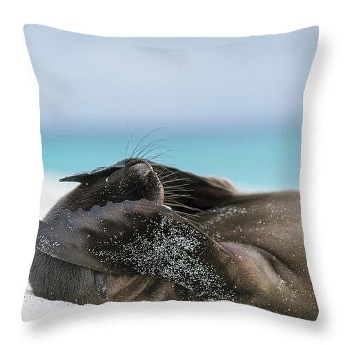 Tui De Roy Throw Pillow featuring the photograph Galapagos Sea Lion Pup Covering Face by Tui De Roy