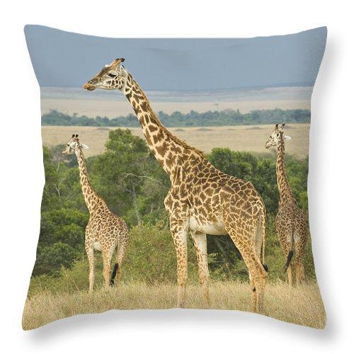 Africa Throw Pillow featuring the photograph Giraffe by John Shaw