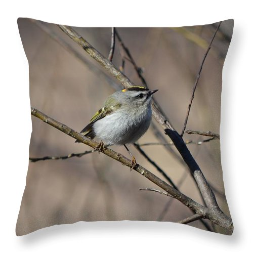 Golden-crowned Kinglet Throw Pillow featuring the photograph Golden-crowned Kinglet by James Petersen