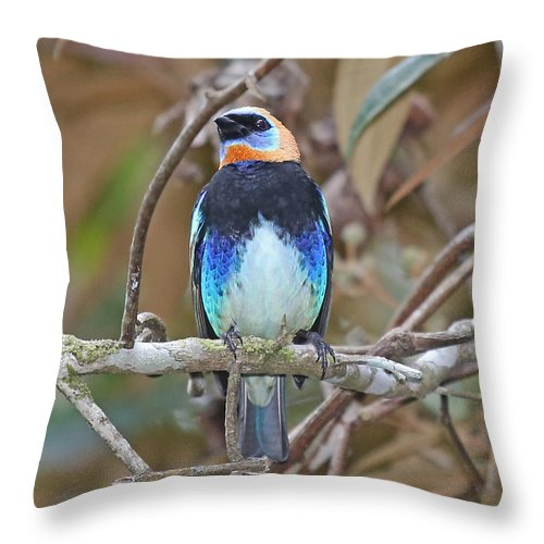 Nature Throw Pillow featuring the photograph Golden-hooded Tanager by Mike Dickie