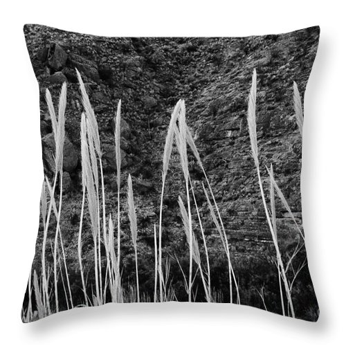 Santa Elena Canyon Big Bend National Park Texas Parks Grass Grasses Foliage Landscape Landscapes Black And White Throw Pillow featuring the photograph Golden Rods 2 by Bob Phillips