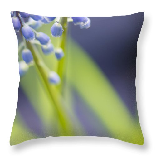 Flower Throw Pillow featuring the photograph Grape Hyacinth by Silke Magino