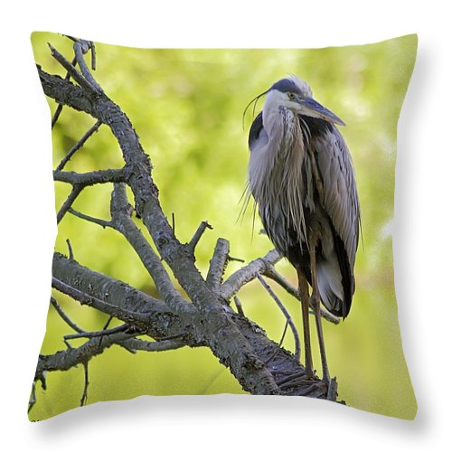2d Throw Pillow featuring the photograph Great Blue Heron by Brian Wallace