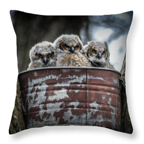 Owls Throw Pillow featuring the photograph Great Horned Owl Chicks by Ronald Grogan