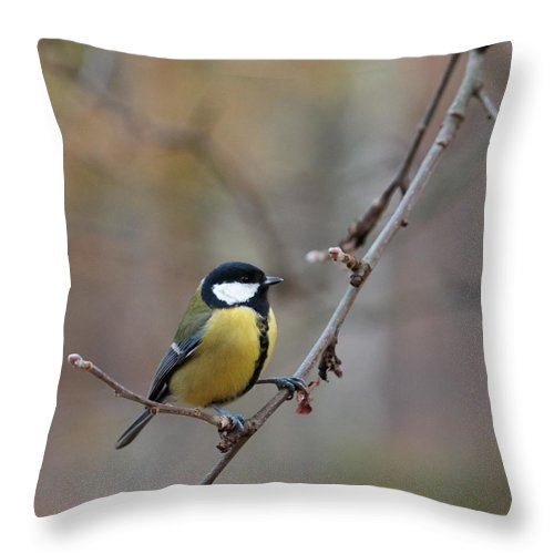 Finland Throw Pillow featuring the photograph Great Tit by Jouko Lehto