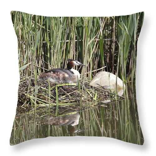 Grebe Throw Pillow featuring the photograph Grebe On Nest by Ronald Jansen