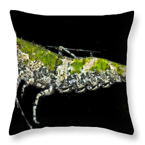 Shrimp Throw Pillow featuring the photograph Green For Shrimp by Sandra Edwards