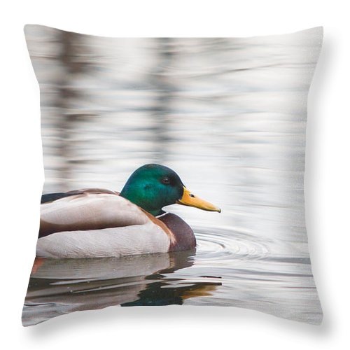 Aves Throw Pillow featuring the photograph Green-headed Duck by Jivko Nakev