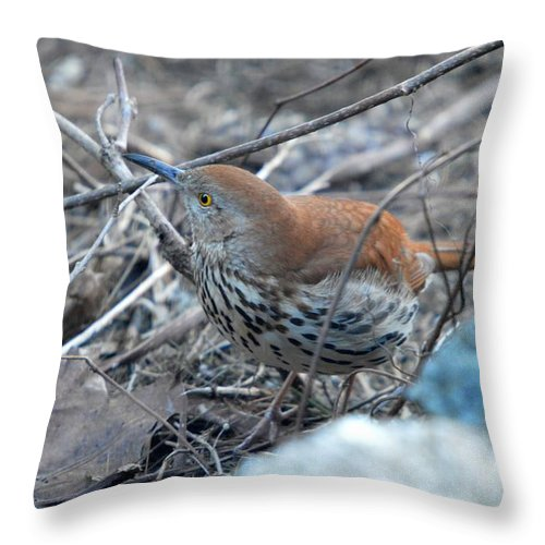 Brown Thrasher Throw Pillow featuring the photograph Hello by Thomas Phillips