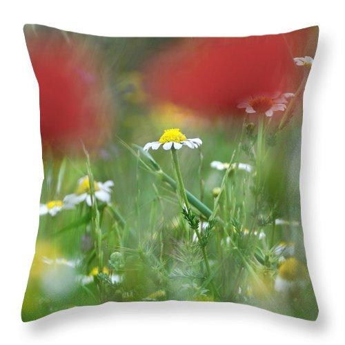 Poppy Throw Pillow featuring the photograph Hidden Flower by Guido Montanes Castillo