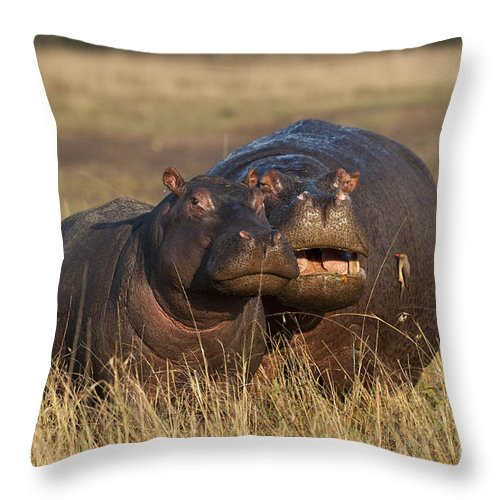 Africa Throw Pillow featuring the photograph Hippo Cow And Calf by John Shaw