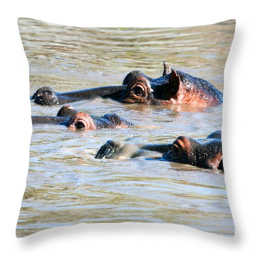 Hippo Throw Pillow featuring the photograph Hippopotamus Group In River. Serengeti. Tanzania by Michal Bednarek