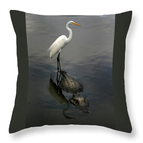 Alligator Throw Pillow featuring the photograph Hitch Hiker by Anthony Jones
