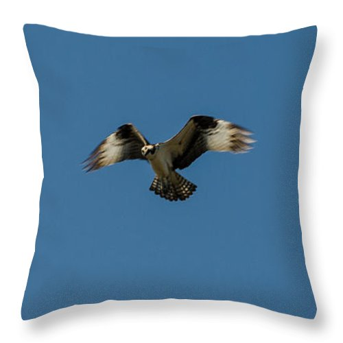 Bird Throw Pillow featuring the photograph Hovering by Donna Brown