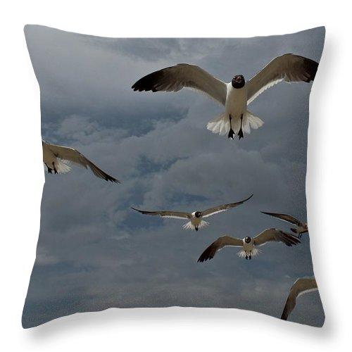 Bird Throw Pillow featuring the photograph Hungry Birds by Stephanie Beller