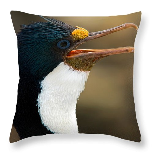 Animal Throw Pillow featuring the photograph Imperial Shag by John Shaw
