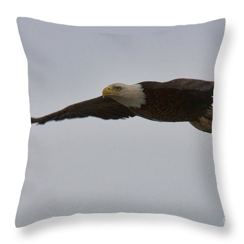 Bald Eagle Throw Pillow featuring the photograph In Flight by David Arment