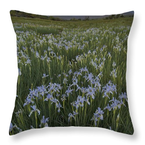 Plant Throw Pillow featuring the photograph Iris Field by John Shaw