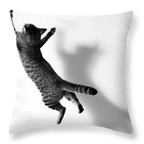 Pets Throw Pillow featuring the photograph Jumping Cat by Akimasa Harada